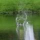 Waterlogged Golf Ball